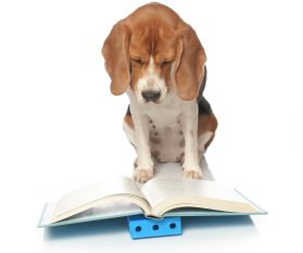 Beagles and Books